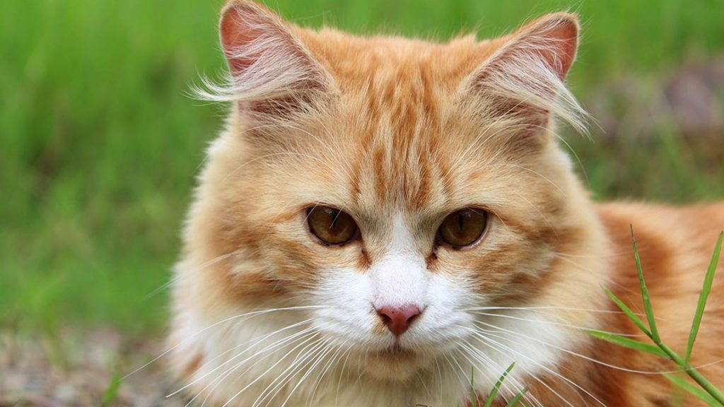 Application that understands the language of cats has been developed 1