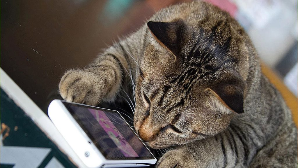 Application that understands the language of cats has been developed
