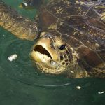 Incredible incident in Madagascar Sea turtles ate and died