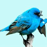 Twitter monetization feature is coming