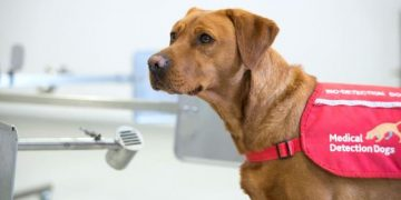 Dogs discovered to be able to diagnose Covid 19 better than PCR tests