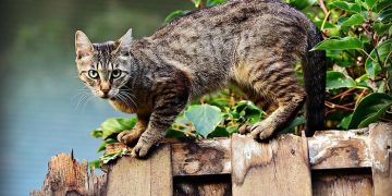 Serial killer panic More than 1000 cats killed